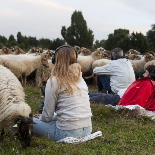 5 anker schapen5