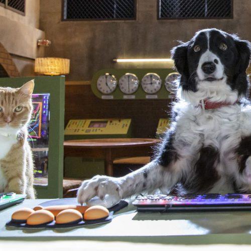 Cats & Dogs slaan de pootjes ineen